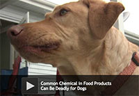 Common Chemical in Food Products Can Be Deadly for Dogs