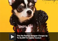 Pet Fashion Designer Charges Up To $5,000 For Canine Couture