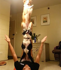 Two Dogs Perform Unbelievable Balancing Trick