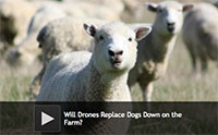 Will Drones Replace Dogs Down on the Farm?
