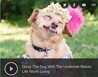 Daisy The Dog With The Underbite Makes Life Worth Living