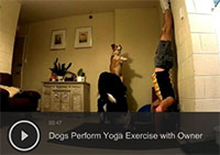 Dogs Perform Yoga Exercise with Owner