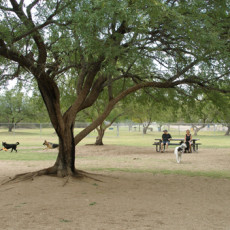 McDonald Park Dog Park Tucson, AZ