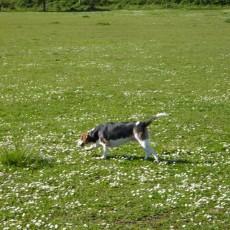 Minto-Brown Island Park Dog Park in Salem OR
