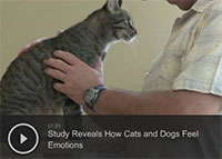 Study Reveals How Cats and Dogs Feel Emotions