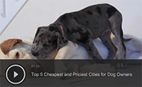Top 5 Cheapest and Priciest Cities for Dog Owners