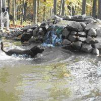 Waterbury Unleashed Dog Park