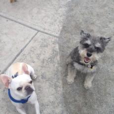 Zero New Washington Street Dog Park Somerville, MA