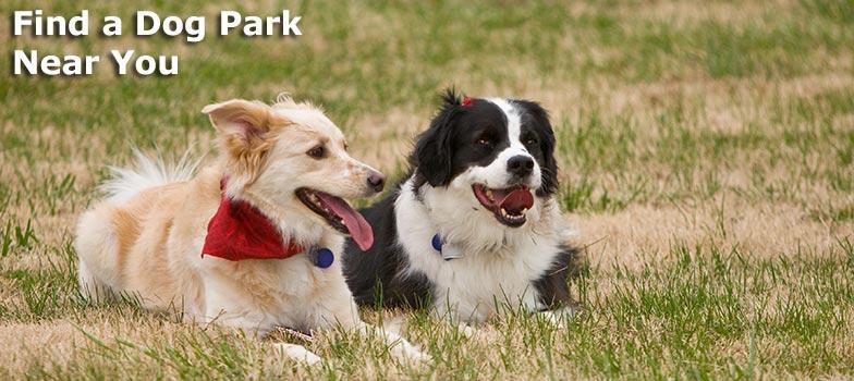 Find a Dog Park Near You