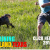 Most reliable dog training services in Texas