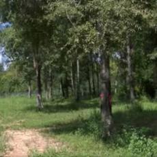 Southside Dog Park in Huntsville AL