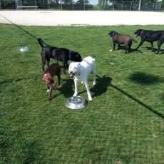 Katz Dog Park in Dekalb Illinois