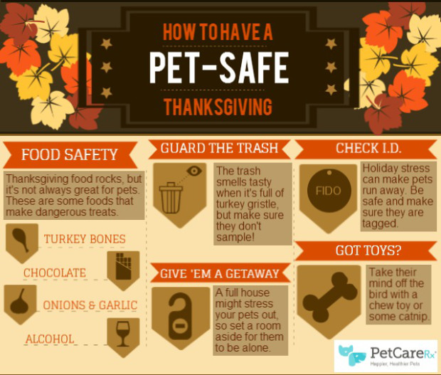 Pet Safe Thanksgiving