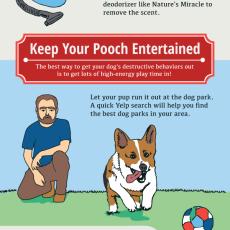 dog friendly apartment hacks
