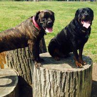 Canine Meadow Dog Park