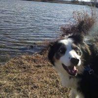 Infirmary Mound Park Dog Park