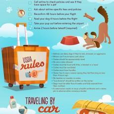Dog Travel Infographic