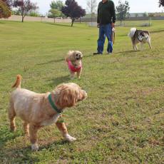Selma Dog Park in Selma California