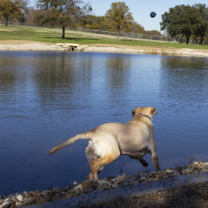 ZBonz Dog Park in Fort Worth Texas