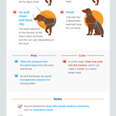 Picking the right dog collar
