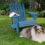 Setting up a Dog-Friendly Backyard