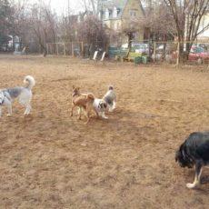 Chester Avenue Dog Park in Philadelphia PA