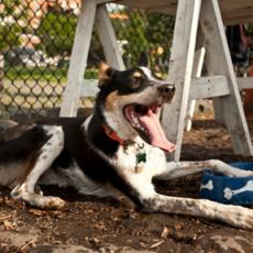 Palmer Doggie Depot Dog Park in Philadelphia PA