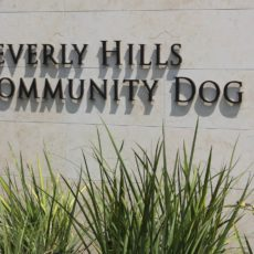 Beverly Hills Community Dog Park