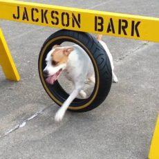 Jackson Bark Dog Park in Jackson NJ