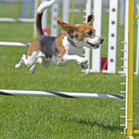 Northwest County Dog Park