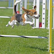 Northwest County Dog Park in Tampa, FL