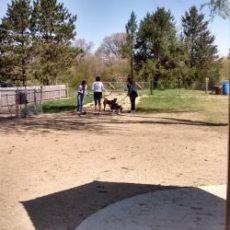 Prairie Moraine County Park Dog Park in Verona, WI