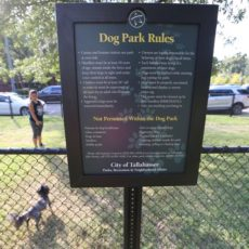 Boulevard Park Dog Park in Tallahassee, FL
