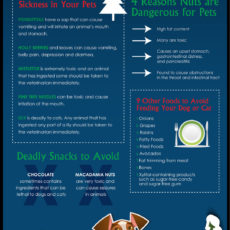 Pet Safety Infographic