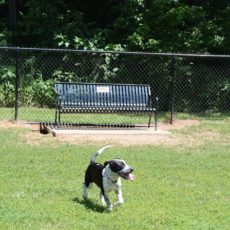 Lynchburg Dog Park