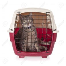 7019110-cat-closed-inside-pet-carrier-isolated-on-white-background
