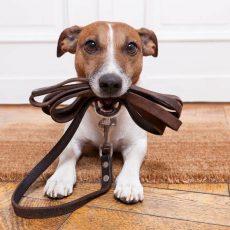 dog-walk.jpg.838x0_q67_crop-smart