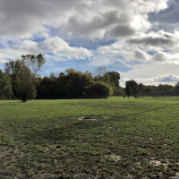 Northern Tail Dog Park