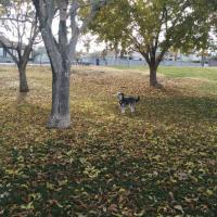 Woofter Park Dog Park