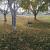 Woofter Park Dog Park - Dog Park in Las Vegas NV