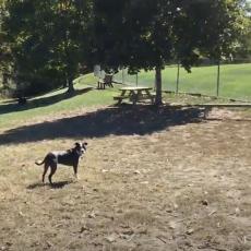 New Fairfield Dog Park