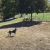 New Fairfield Dog Park