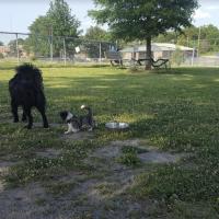 Tobey Park Dog Park